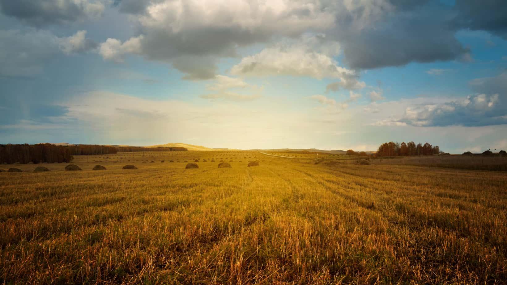 Ile wynosi emerytura rolnicza?